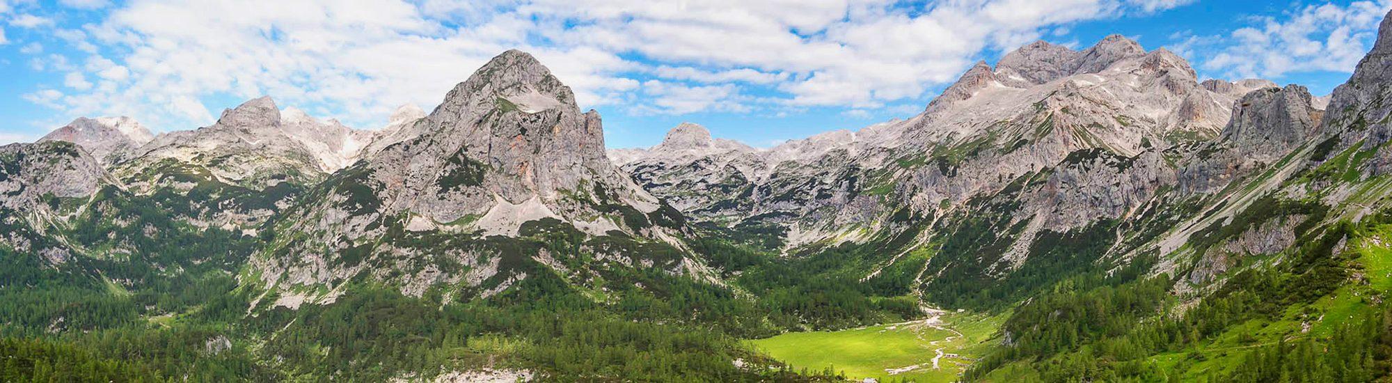 SpiraTree_Alps_web